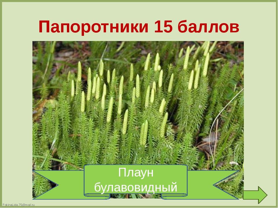 Голосеменные 10 баллов Ее всегда в лесу найдешь – Пойдем гулять и встретим: С...