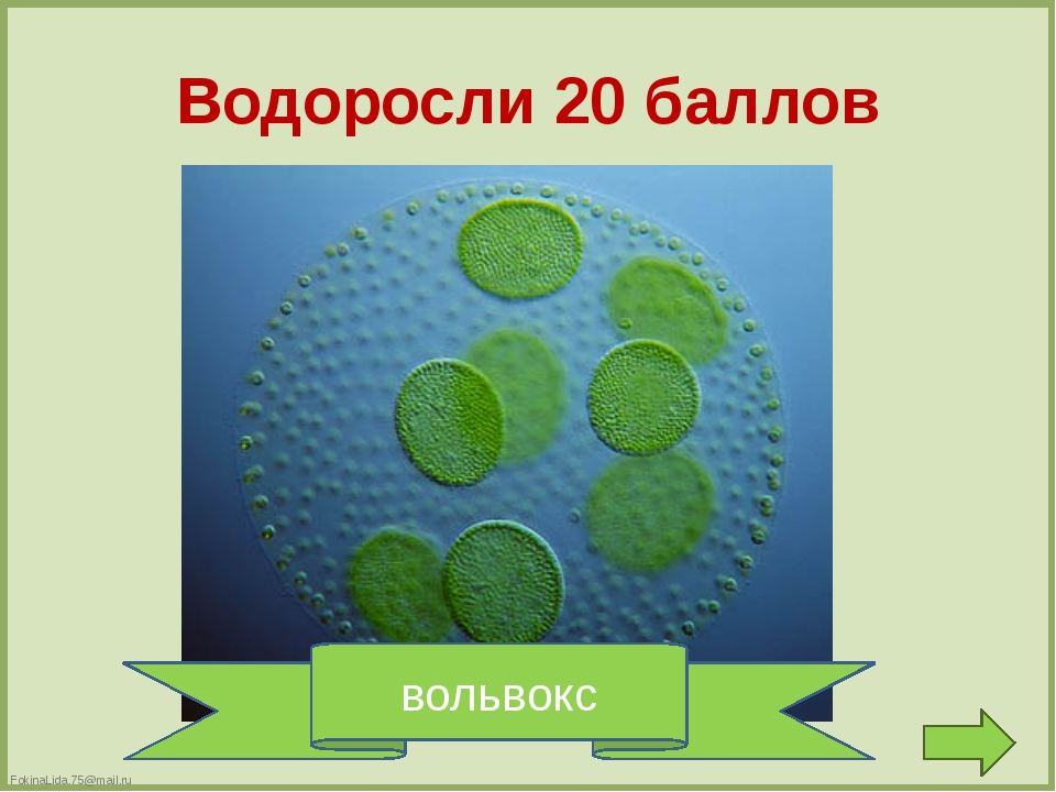 Мхи 10 баллов сфагнум FokinaLida.75@mail.ru