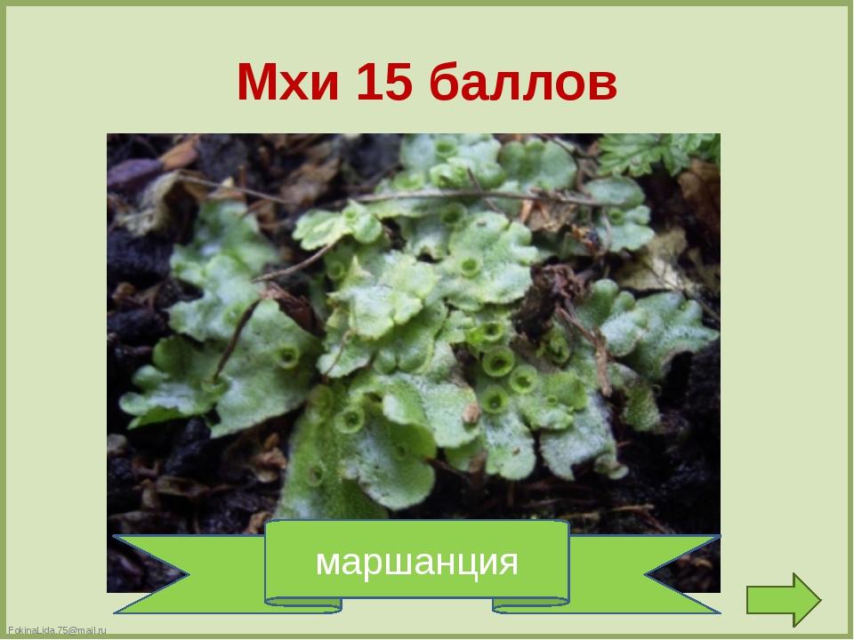 Папоротники 5 баллов хвощ СТ = Щ FokinaLida.75@mail.ru