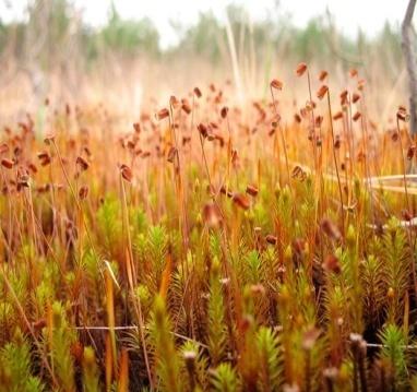 Где купить мох кукушкин лен строительный красный мох?