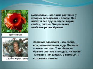 Цветковые – это такие растения, у которых есть цветки и плоды. Они имеют и вс