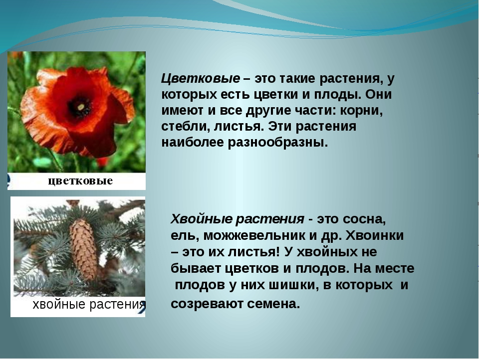 Доклад о разнообразии семян 7034