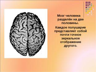 Мозг человека разделён на две половины. Каждое полушарие представляет собой