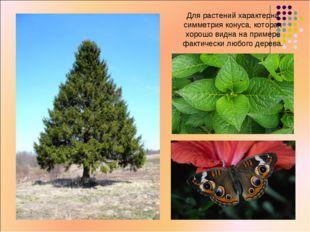 Для растений характерна симметрия конуса, которая хорошо видна на примере фак