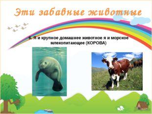 Эти забавные животные 6. Я и крупное домашнее животное я и морское млекопитаю
