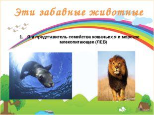 Эти забавные животные Я и представитель семейства кошачьих я и морское млекоп