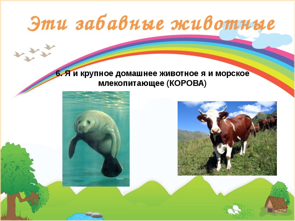 Эти забавные животные 6. Я и крупное домашнее животное я и морское млекопитаю...