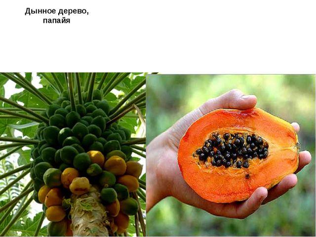 Дынное дерево, папайя