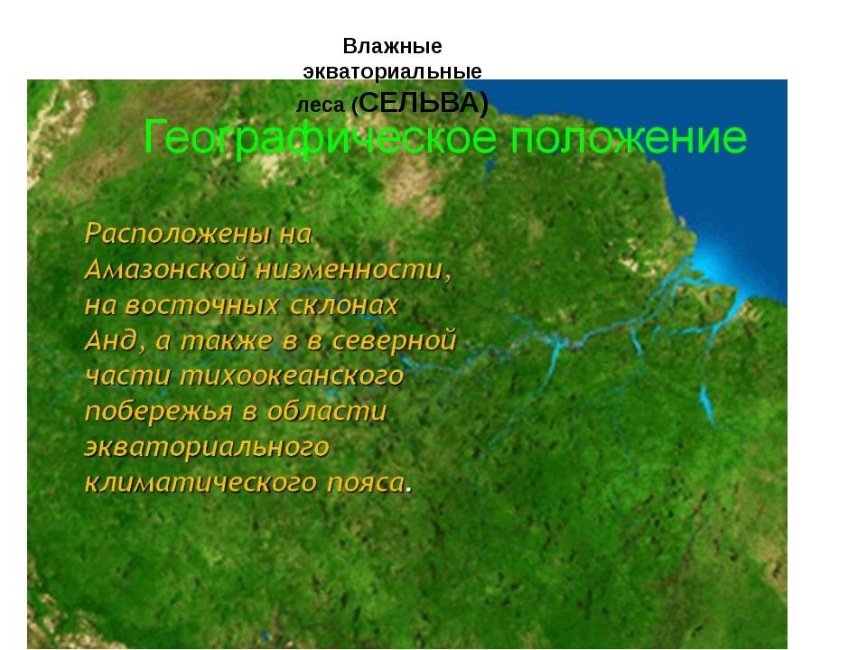 Влажные экваториальные леса (СЕЛЬВА)