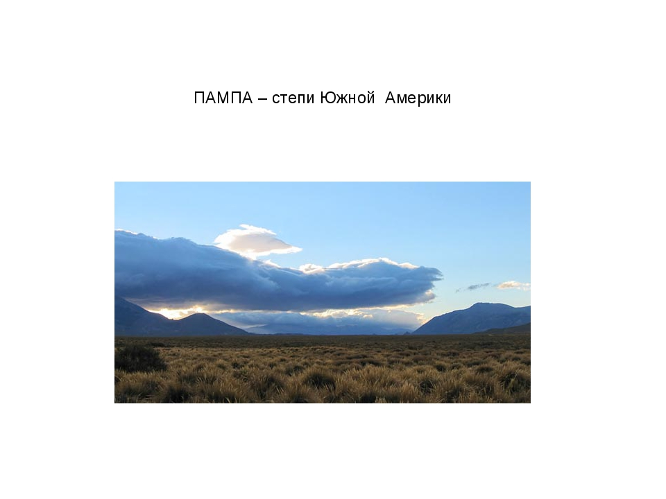 ПАМПА – степи Южной Америки