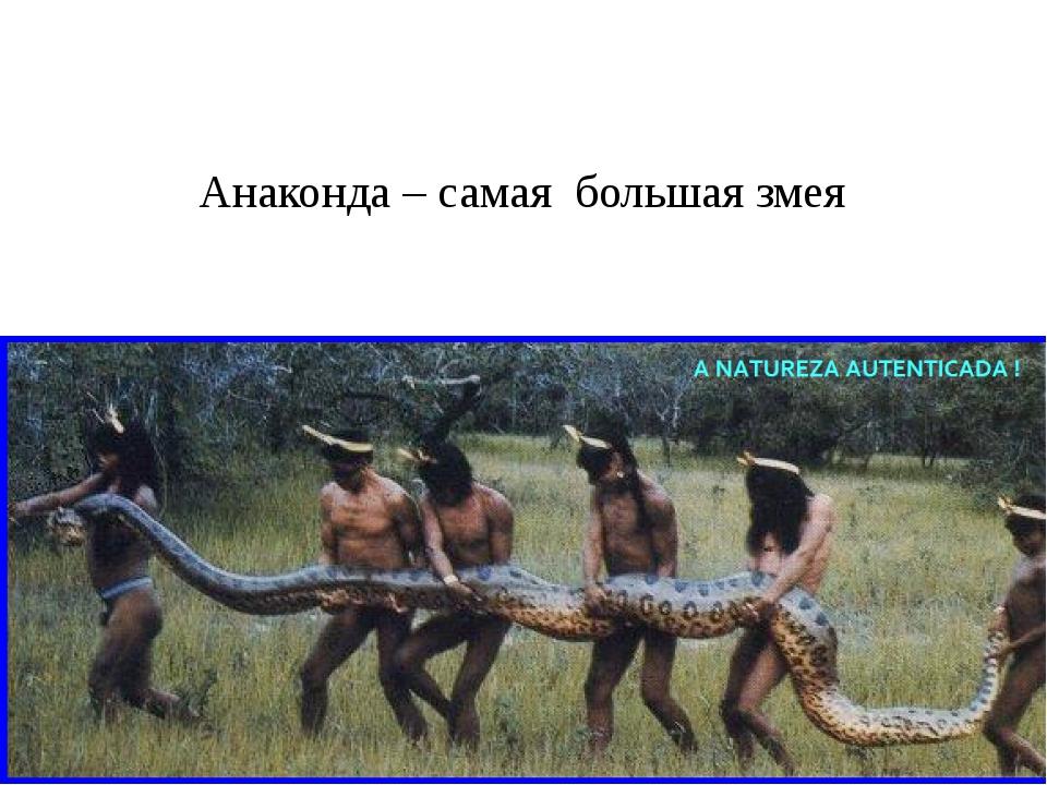 Анаконда – самая большая змея
