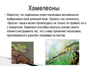 Известно, что хамелеоны ловят насекомых молниеносно выбрасывая свой длинный я