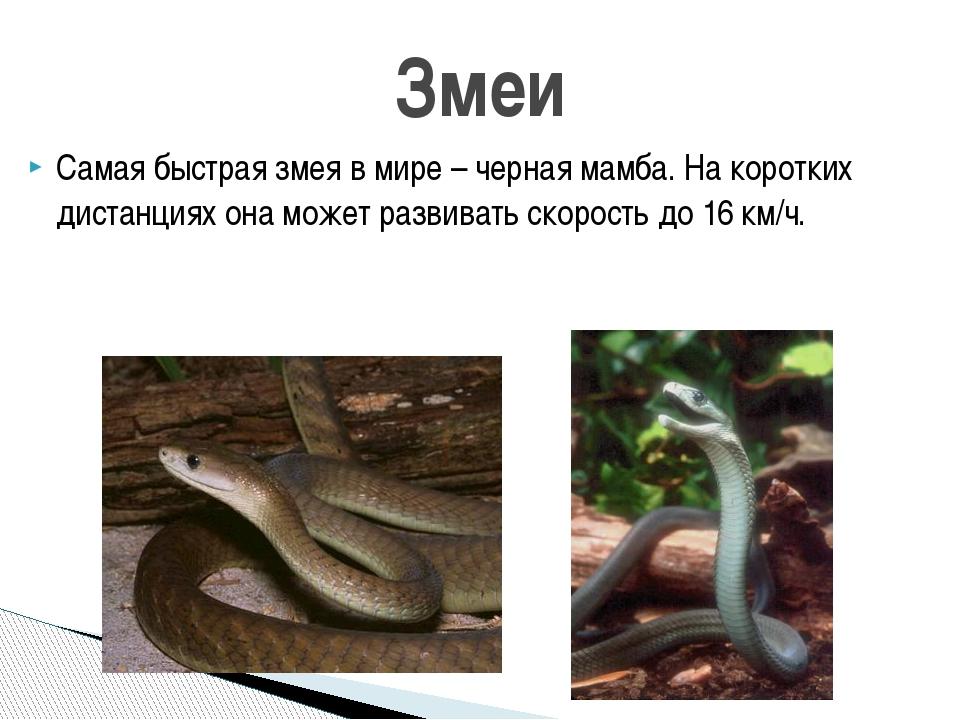 Самая быстрая змея в мире – черная мамба. На коротких дистанциях она может ра...