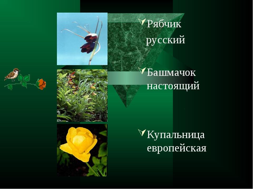 Рябчик русский Башмачок настоящий Купальница европейская