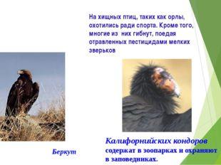 На хищных птиц, таких как орлы, охотились ради спорта. Кроме того, многие из