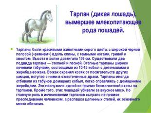 Тарпан (дикая лошадь), вымершее млекопитающее рода лошадей. Тарпаны были крас