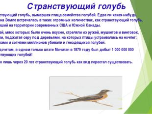 Странствующий голубь Странствующий голубь, вымершая птица семейства голубей.