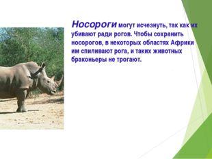 Носороги могут исчезнуть, так как их убивают ради рогов. Чтобы сохранить носо