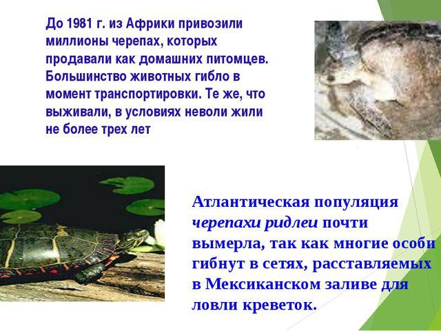 До 1981 г. из Африки привозили миллионы черепах, которых продавали как домашн...