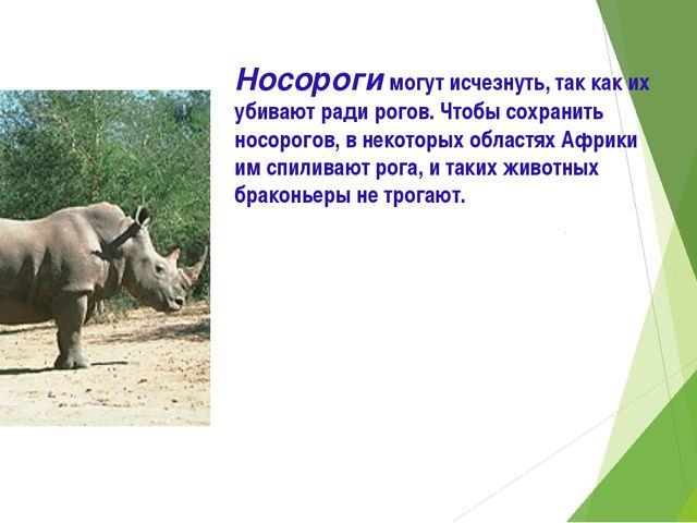 Носороги могут исчезнуть, так как их убивают ради рогов. Чтобы сохранить носо...