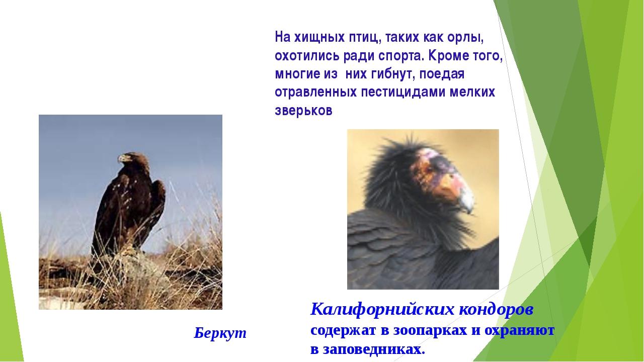 На хищных птиц, таких как орлы, охотились ради спорта. Кроме того, многие из...