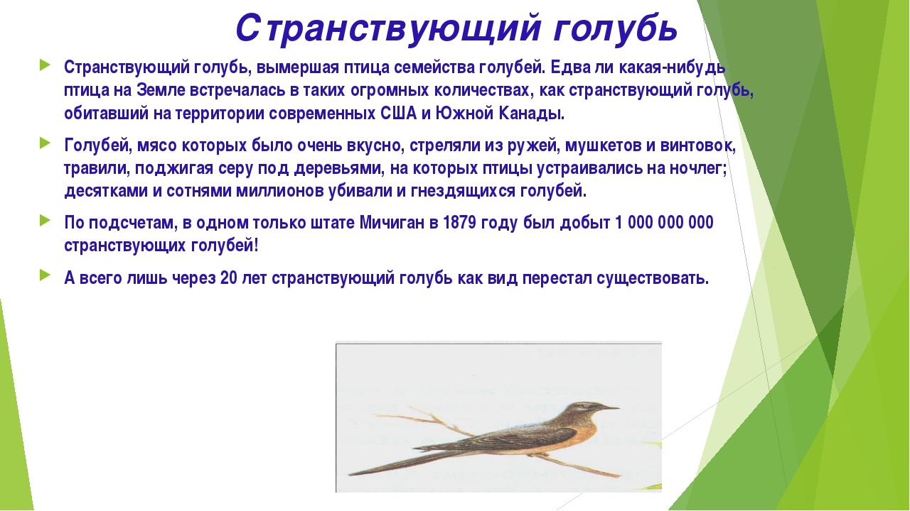 Странствующий голубь Странствующий голубь, вымершая птица семейства голубей....