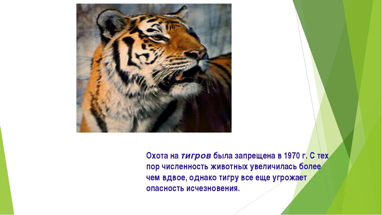 Охота на тигров была запрещена в 1970 г. С тех пор численность животных увели...