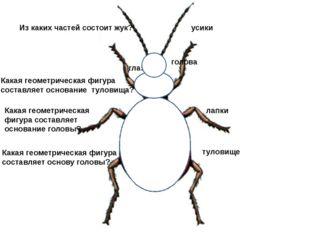 Из каких частей состоит жук? туловище голова лапки усики глаза Какая геометри