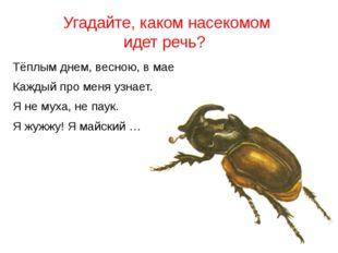 Угадайте, каком насекомом идет речь? Тёплым днем, весною, в мае Каждый про ме