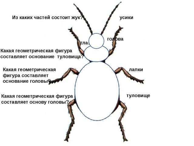 Из каких частей состоит жук? туловище голова лапки усики глаза Какая геометри...