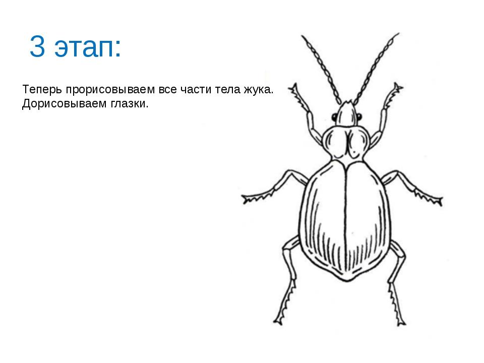 3 этап: Теперь прорисовываем все части тела жука. Дорисовываем глазки.