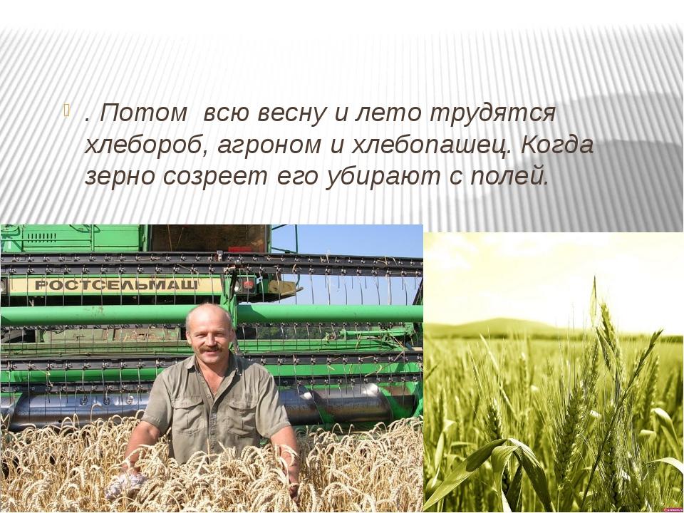 . Потом всю весну и лето трудятся хлебороб, агроном и хлебопашец. Когда зерн...