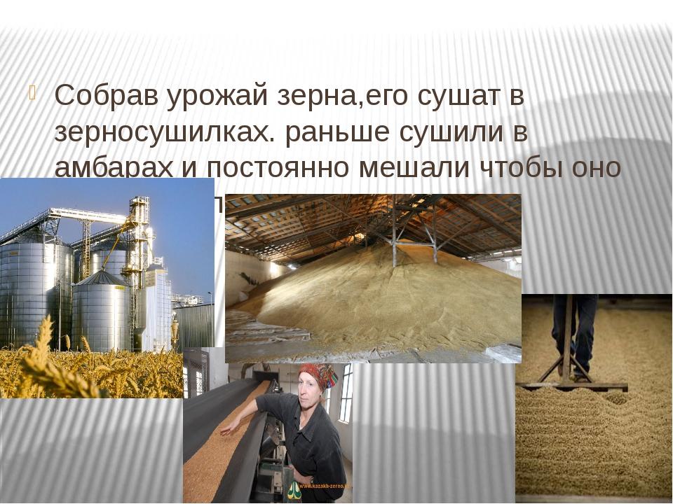 Собрав урожай зерна,его сушат в зерносушилках. раньше сушили в амбарах и пос...