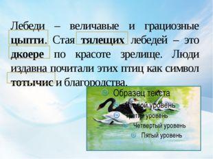 Лебеди – величавые и грациозные цыпти. Стая тялещих лебедей – это дкоере по к
