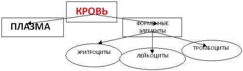 http://festival.1september.ru/articles/568861/img2.jpg