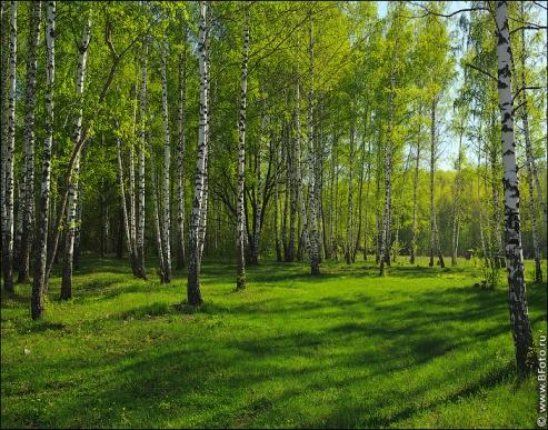 http://www.bfoto.ru/foto/spring/bfoto_ru_4167.jpg
