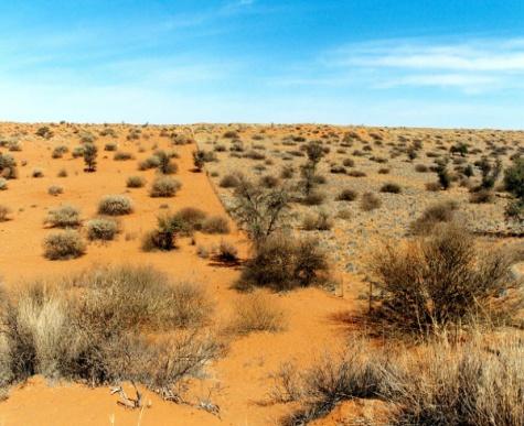 http://eco-turizm.net/wp-content/uploads/2013/02/Kalahari-pustyinya-v-YUAR.jpg