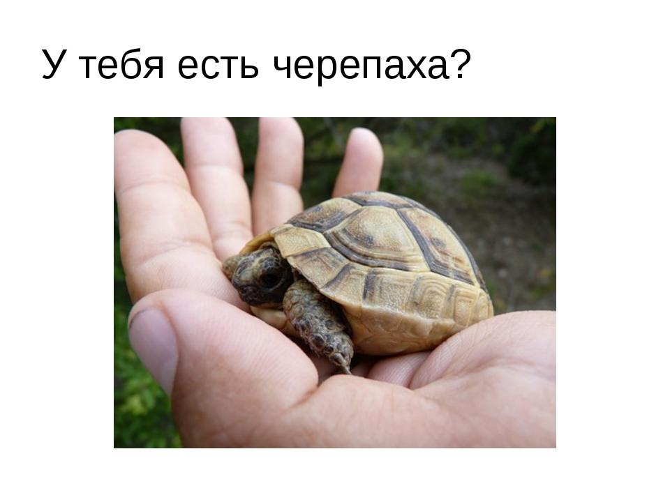 У тебя есть черепаха?
