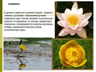 В древних славянских сказаниях водная - кувшинка связана с русалками - прекра