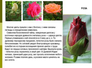 Многие цветы пришли к нам с Востока, с ними связаны легенды и определенная си