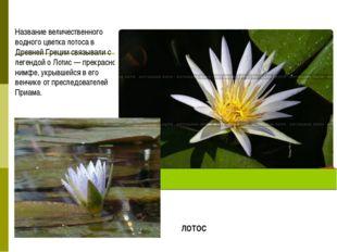 Название величественного водного цветка лотоса в Древней Греции связывали с л