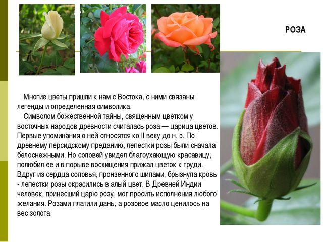 Многие цветы пришли к нам с Востока, с ними связаны легенды и определенная си...