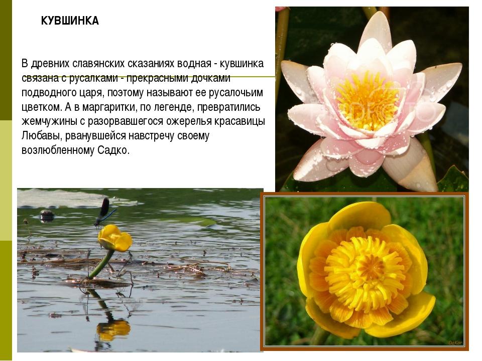 В древних славянских сказаниях водная - кувшинка связана с русалками - прекра...
