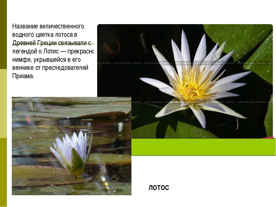 Название величественного водного цветка лотоса в Древней Греции связывали с л...