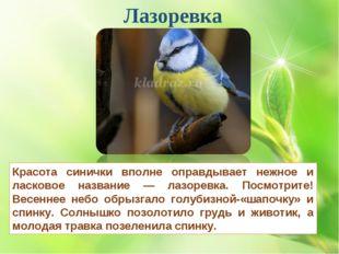 Лазоревка Красота синички вполне оправдывает нежное и ласковое название — лаз