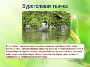 Буроголовая гаичка Буроголовая гаичка небольшая подвижнаясиница, населяющая