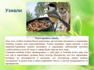 Чем кормить синиц Для того, чтобы птички были довольны, достаточно насыпать в