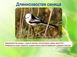 Длиннохвостая синица Длиннохвостая синица – одна из мелких толстоклювых синиц