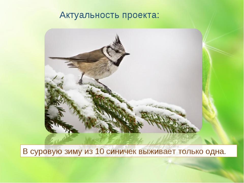 Актуальность проекта: В суровую зиму из 10 синичек выживает только одна.