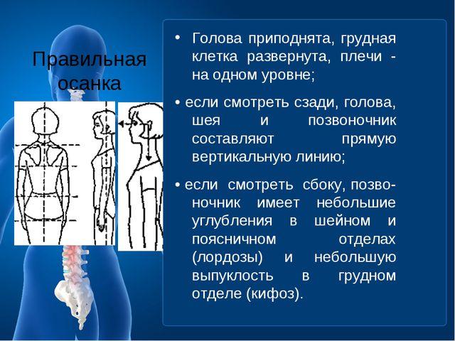 Правильная осанка Голова приподнята, грудная клетка развернута, плечи - на од...